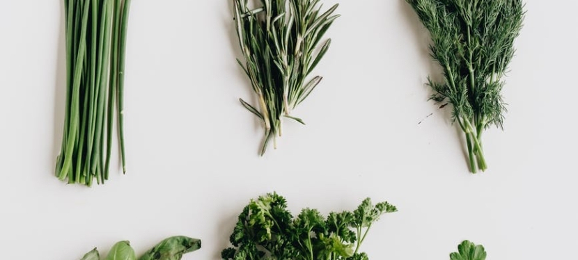 Top 5 Edible Crops to Plant Now for an Early Urban FarmHarvest